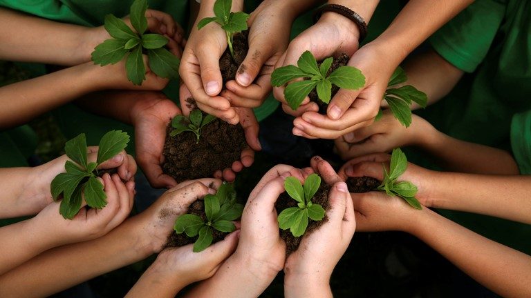 Children's hands holding seedlings